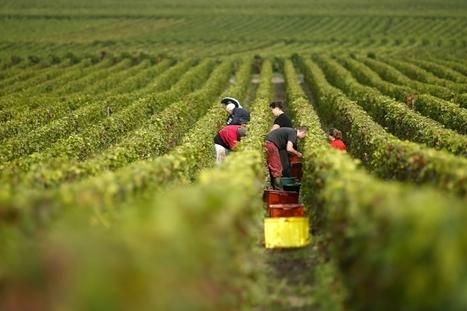 Changement climatique - Comment des Français imaginent le vin du futur | Chimie verte et agroécologie | Scoop.it