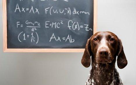 Algorithms Will Train Your Dog | Quantified Pet | Scoop.it