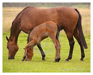 BREEDING PART 4 - Caring for the new born foal and the mare. | Genetics and Animal Breeding | Scoop.it