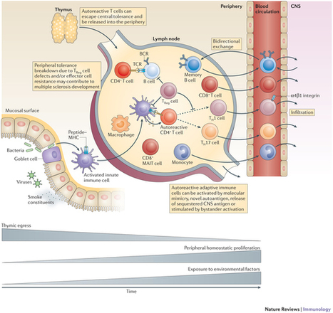 Immunopathology of multiple sclerosis : Nature Reviews Immunology : Nature Publishing Group | Immunology, vaccine & infectious diseases | Scoop.it
