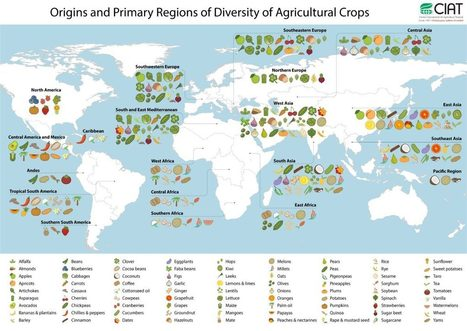 Origin of crops | CIAT Blog | IB GEOGRAPHY The geography of Food and Health PEMBROKE | Scoop.it