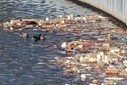 Scientists Discover a Great Garbage Patch in Lake Erie | Wildlife News | Scoop.it
