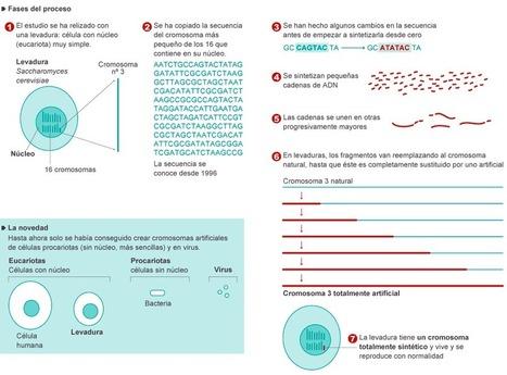 Creación de un cromosoma artificial | CMC_VivirmasVivirmejor | Scoop.it