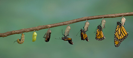 13 Tips for Transformation: A Checklist for Change Agents | B2B Marketing and PR | Scoop.it