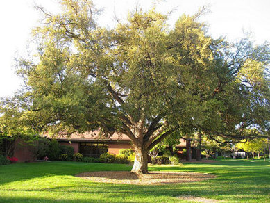 How To Choose A Tree That Will Not Cause Foundation Problems | Home Foundation Repair Arlington, Texas | Scoop.it