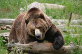 Save Endangered Species in Canada - Nature Canada | canadian wildlife conservation | Scoop.it