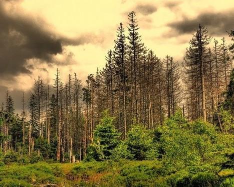 ¿Qué es la lluvia ácida? - ElBlogVerde.com | Agua | Scoop.it