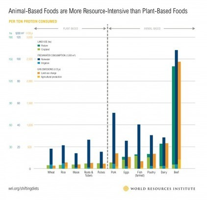 Animal-based Foods are More Resource-Intensive than Plant-Based Foods | World Resources Institute | ELM-  Food Security | Scoop.it