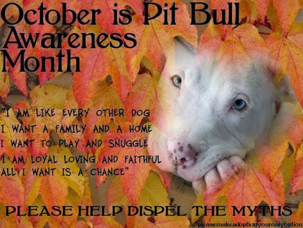 Pit Bull Awareness Month Continues and What a Great Opportunity to Share our… | Animals - fact and fiction | Scoop.it