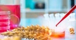 Ces 'nouveaux OGM' sur lesquels planche Monsanto   Alimentation Santé Environnement   Scoop.it