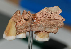 New evidence for the earliest modern humans in Europe | Histoire - Antiquité | Scoop.it
