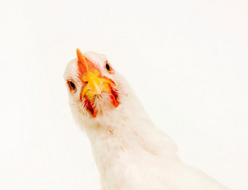 Chicken feathers to make their way into cosmetics   Natural skin care   Scoop.it