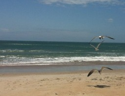 Beat the Winter Blues with a Bird Watching Expedition   Outer Banks Neighborhoods   Everything OBX   Scoop.it