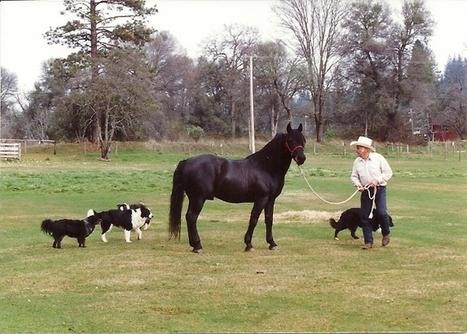 Morgan Stock Horse Association | Today's Horse Sense | Scoop.it