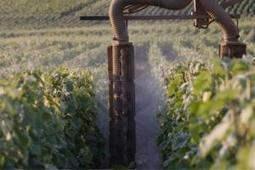 Pratiques culturales » Ces 50 % d'exploitations qui surdosent les produits phytosanitaires - Actualité 12-08-2013 - REUSSIR VIGNE | Christophe Durand Conseils | Scoop.it