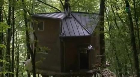 [vidéo] Maison dans les arbres illégale, le propriétaire fait de la résistance | J'écris mon premier roman | Scoop.it