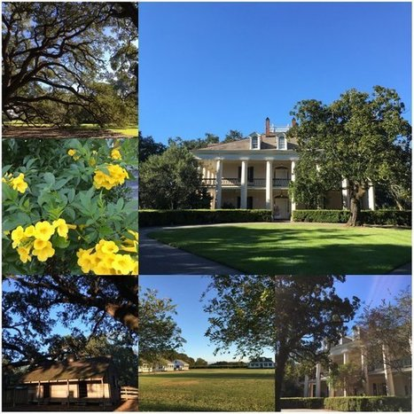 Tweet from @bananauo | Oak Alley Plantation: Things to see! | Scoop.it