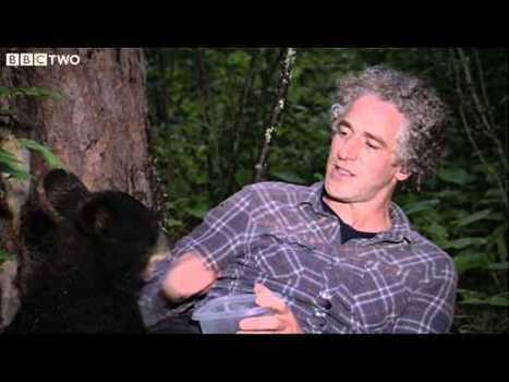 Famous TV Bear, Hope, Killed by Hunter | Negotiation Is Over! | Animal Cruelty | Scoop.it