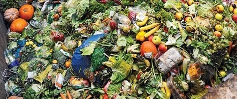 The food-waste debate could use a pinch of common sense | Food issues | Scoop.it