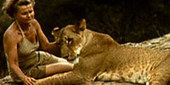 "Elsa's Legacy: Backstory to ""Born Free"" Movie - Original Footage... The Lions Are Going..... 