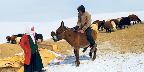 Animal husbandry in the East bleeds due to livestock imports | Food issues | Scoop.it