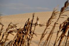 Feugomania: Cape Verde (April 2011): Part 2: Boa Vista   West Africa: Tourism   Scoop.it