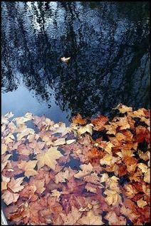 11 novembre 1989  |  Lionel Bourg, Notes d'automne #TdF #éphéméride_culturelle_à_rebours | TdF  |  Éphéméride culturelle | Scoop.it