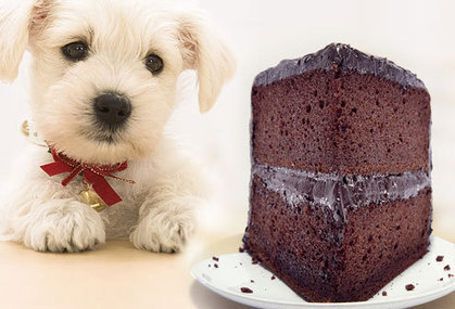 26 Foods That Could Kill Your Pets! | Laws for Paws | Scoop.it