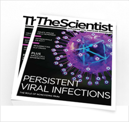 TSLive: The Enemy Within | The Scientist Magazine® | Virology News | Scoop.it
