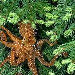 'Tree Octopus' Hoax Shows Kids Believe Anything Online   K-5 Common Core State Standards   Scoop.it