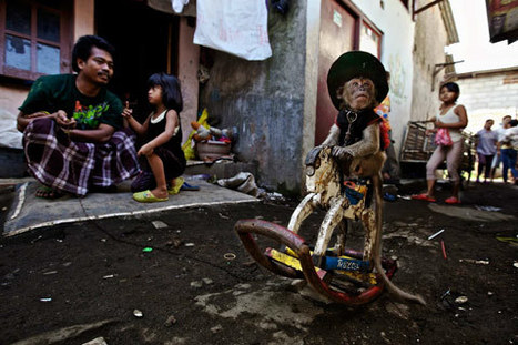 The Masked Monkeys of Indonesia | Photographer: Ed Wray | PHOTOGRAPHERS | Scoop.it
