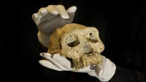 1,8 miljoen jaar oude mensenschedel gevonden   geschiedenis   Scoop.it