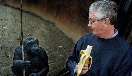 El bonobo y los diez mandamientos. En busca de la ética entre los ... - El Cultural.es | Ètica i ciudadania | Scoop.it