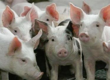 Une odeur pestilentielle peut tuer ! | Actualité de l'Industrie Agroalimentaire | agro-media.fr | Scoop.it