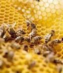 Les abeilles, une bonne source d'informations sur l'environnement | ACTUALITES GEOGRAPHIQUES DE LA BRETAGNE | Scoop.it