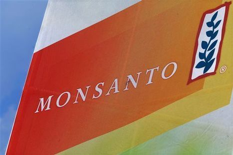 Monsanto wins Chinese import approval for genetically modified soybeans | Grain du Coteau : News ( corn maize ethanol DDG soybean soymeal wheat livestock beef pigs canadian dollar) | Scoop.it