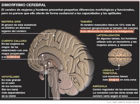 Adiós al cerebro femenino-Sociedad-El Periódico | Ciència | Scoop.it