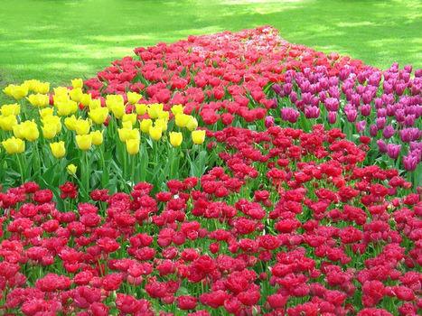 Know about 6 Fool Proof Flowers for Beginner Gardeners | Flower Bulbs | Scoop.it
