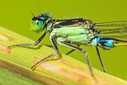 Pesticides decimating dragonflies and other aquatic insects | 100 Acre Wood | Scoop.it