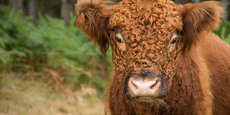 Et si on abattait les animaux à la ferme ? | Boite à outils blog | Scoop.it