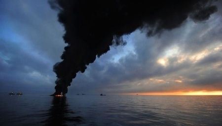 BP's oiled animals: Where are they now? | CRJS340-BP Oil Spill | Scoop.it