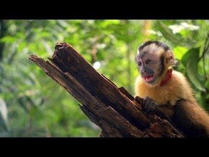 #AMAZONIA - #BandeAnnonce du #Film #2013 - #Filmsactu - #Video partagée par #PetitBuzz via #Scoopit - Le Petit #Blog du #Buzz ! Petitbuzz.com | Buzz Actu - Le Blog Info de PetitBuzz .com | Scoop.it