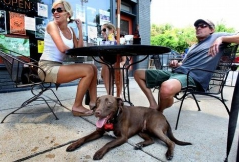 Best Dog Friendly Restaurants in Wilmington - Live Work Play | Live Work Play Wilmington Delaware | Scoop.it
