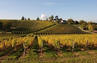 Oenotourisme - Séjour au vignoble | Oenotourisme | Scoop.it