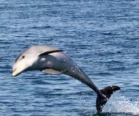 ACRES to appeal against dolphins being sent to RWS - Channel NewsAsia   Earth Island Institute Philippines   Scoop.it
