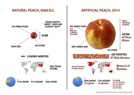 Here's what 9,000 years of breeding has done to corn, peaches, and other crops | Geography resources | Scoop.it