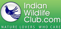 Wildbytes TV - Indian Wildlife Club Ezine - November, 2011 | Wilderness Conservation | Scoop.it