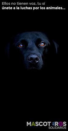 Los métodos preventivos para la leishmaniosis canina | Su Protección | aprendenaturales | Scoop.it