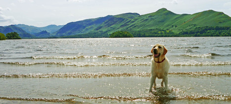Dog friendly holiday cottage at Hall Hills self catering, Lake District, Cumbria | Holiday cottages | Scoop.it