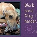 Wicks and wines to help the galgos!   Galgos around the world   Scoop.it